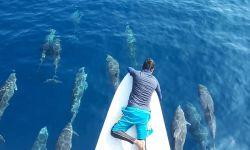 DENR 12, partners spotted hundreds of Marine Mammals in Sarangani Bay