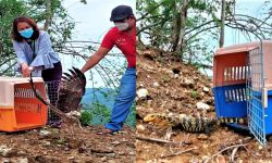 RESCUED AND RELEASED WILDLIFE IN SARANGANI